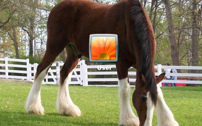Horses Logon Screen