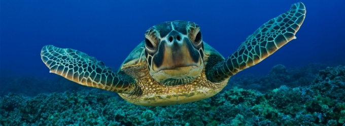 Sea Turtle Windows Theme